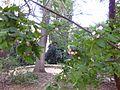 Gardenology.org-IMG 2628 ucla09.jpg