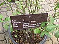 Gardenology.org-IMG 7962 qsbg11mar.jpg