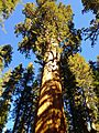 General Sherman tree - Sequoia National Park.jpeg
