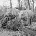 Germany Under Allied Occupation BU11449.jpg
