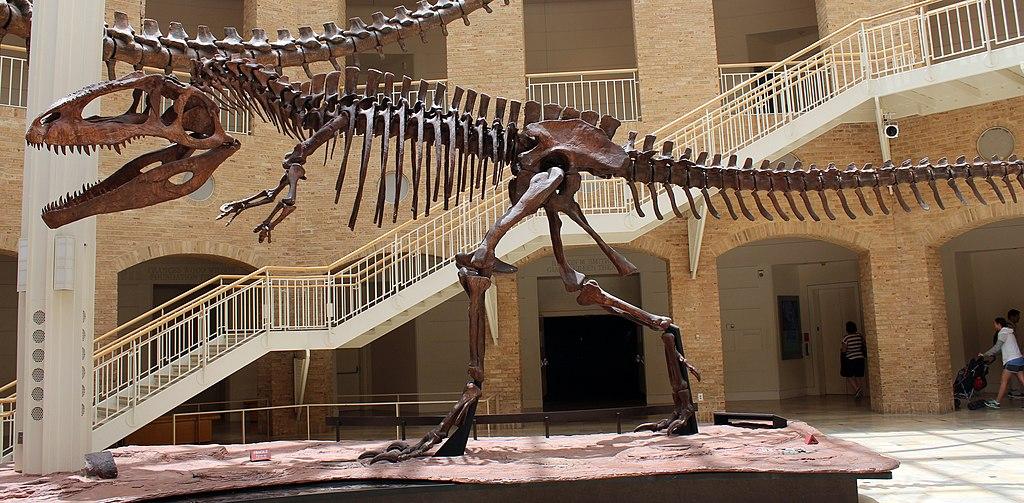 Squelette de Giganotosaure