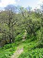 Gleann Meadail path - geograph.org.uk - 920892.jpg