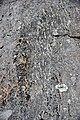 Gneiss (Proterozoic; Port Leyden, western Adirondacks, New York Sate, USA) 2 (27007949648).jpg