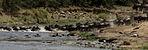 Gnus passing Mara River-02, by Fiver Löcker.jpg
