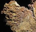 Gold vein stockwork in limonite (Gold Flake Vein, Farncomb Hill, near Breckenridge, Colorado, USA) 11 (17053616966).jpg