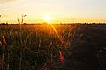 Grassland (12304686263).jpg