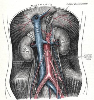 Arteriosclerosis obliterans - Abdominal aorta
