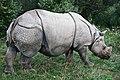Great One-horned Asian Rhino (7661757764).jpg