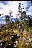 Great Smoky Mountains National Park GRSM1021.jpg