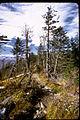 Great Smoky Mountains National Park GRSM1021.jpg