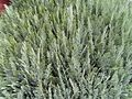 Green bush plant.jpg