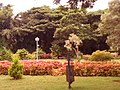 Greenery in the Glass House compound in Hubli - panoramio.jpg