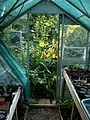 Greenhouse doorway - Flickr - peganum.jpg