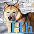 H is for Husky.jpg