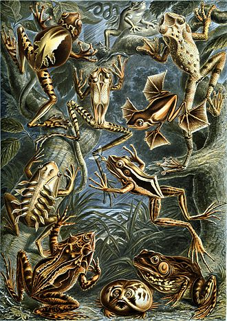 Unclean spirit - Frogs of the amphibian class Batrachia (Haeckel, 1904); Revelation compares three pneumata to frogs (Greek batrachoi), an unclean animal