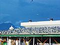 Hajrat Bal Ganj Masjid.jpg