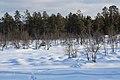 Haukkapesäjoki, Inari, Suomi - Finland 2013-03-10 b.jpg