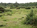 Heathland between Culverley Farm and Shepton Water, New Forest - geograph.org.uk - 35966.jpg
