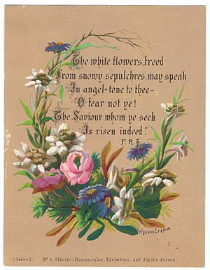 Ranunculus glacialis - Chromolithograph of Glacier-Ranunculus, with Edelweiss, and Alpine Asters, by Helga von Cramm. (With verse by F.R.Havergal. c. 1870.