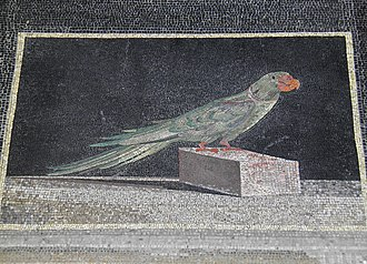 Hellenistic Greece - Detail of a Hellenistic mosaic floor panel showing an Alexandrine parakeet, from the acropolis of Pergamon (near modern Bergama, Turkey), dated to the middle of the 2nd century BC (during the reigns of Eumenes II and Attalus II of Pergamon)