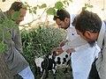 Hemorrhagic Fever Investigation - Pakistan (17057997135).jpg