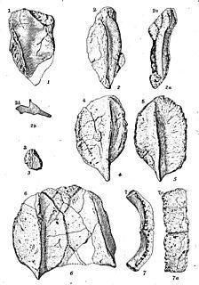 <i>Hierosaurus</i> genus of reptiles (fossil)