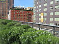 High Line, New York City (2014) - 03.JPG