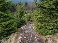 Hiking trail at northwest of the Altkönig.jpg