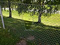 Hole in wire fence 2016.jpg