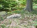 Holzer Konglomerat im Holzer Wald.jpg