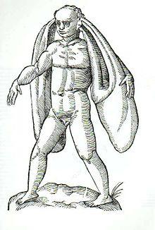 Homo Fanesius Auritus, nella Monstrorum historia di Jean-Baptiste Coriolan, 1642