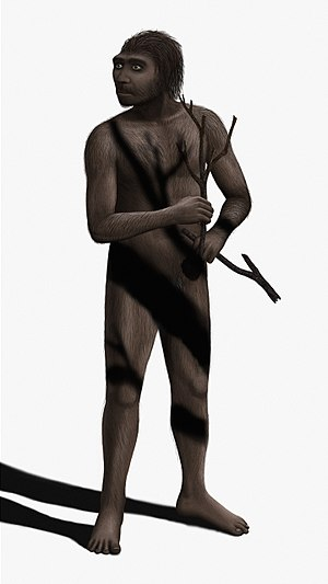Homo erectus male, NOTE: I often update my ima...