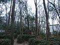 Hong Lou Park - Blank stele bixi, seen behind the trees - P1060597.JPG