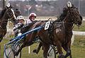 Horse Races 006 (8605823445).jpg