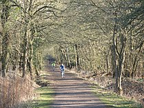 Horse Ride, Wimbledon Common - geograph.org.uk - 692221.jpg