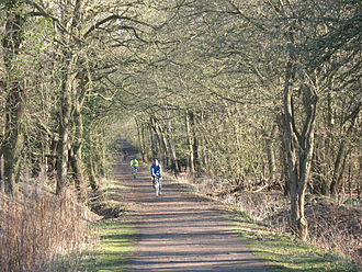 Wimbledon Common - The Horse Ride is a tree tunnel (route overhung by trees) on the western side of Wimbledon Common