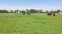 File:Horses running in a pasture.webm