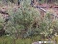 Hosford Creek Water Quality Testing, Yukon-Charley Rivers, 2003 2 (546ae76f-01f7-4397-9c9c-ca25a2dedba0).jpg