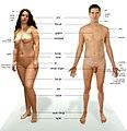 Human anatomy tr.jpg