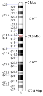 Map of Chromosome 6