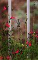 Hummingbird (213402116).jpg