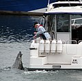 Hungry seal, Bangor harbour - geograph.org.uk - 941384.jpg
