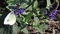IMA Gardens - Papillon (2592097161).jpg