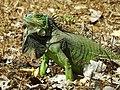 Iguana Verde. - panoramio.jpg