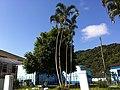 Iguape - SP - panoramio (259).jpg