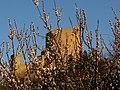 Il castello ed i fiori.jpg
