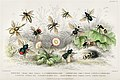 Illustration from A History of the Earth and Animated Nature by Oliver Goldsmith from rawpixel's own original edition of the publication 00071.jpg