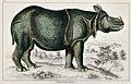 Illustration from A History of the Earth and Animated Nature by Oliver Goldsmith from rawpixel's own original edition of the publication 00078.jpg