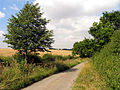 Ilsley Down Riding Route - geograph.org.uk - 39278.jpg