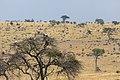 Impressions of Serengeti (107).jpg
